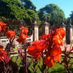 Canna lilies at the Entrance to the Botanical Gardens