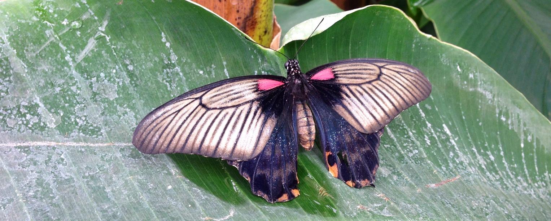 """""""Sensational Butterflies"""" in London"""