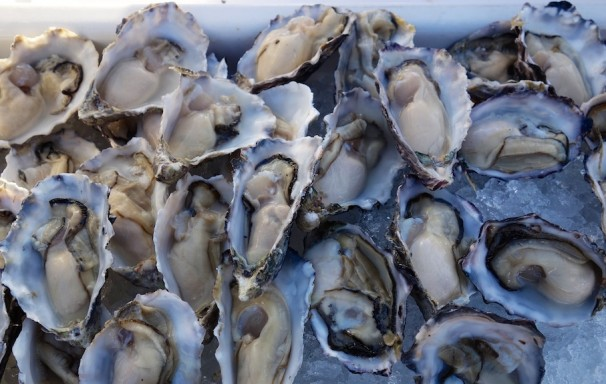 Creamy Namibia local oysters as good as Sydney Rocks