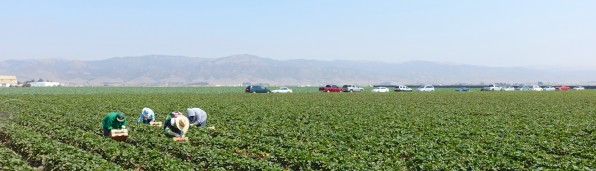Agricultural Heart of California