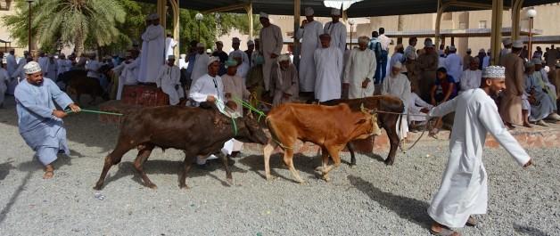 Friday Cattle Market at the Nizwa Souk