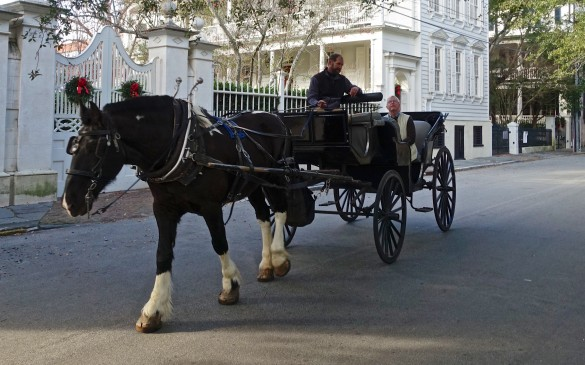 Relaxing mode of transport to view the historic streets and squares of Charleston SC