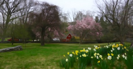 Watercolour effect - Early Spring display of colour from the daffodils and magnolia